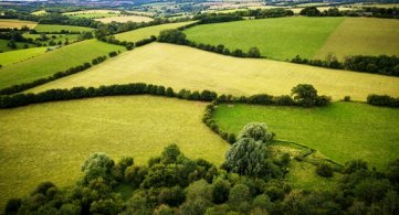 Hedgerows & Climate Change
